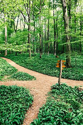 Wanderwege im Nationalpark - p1168m1138024 von Thomas Günther