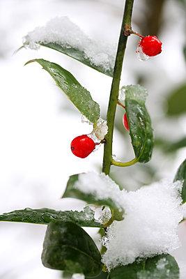 Snowy - p450m1115925 by Hanka Steidle