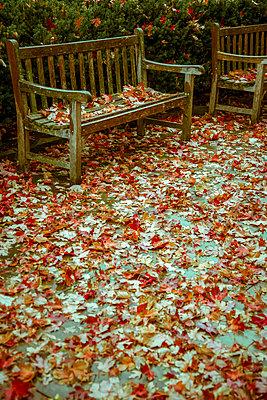 Fallen leaves - p1170m2145236 by Bjanka Kadic
