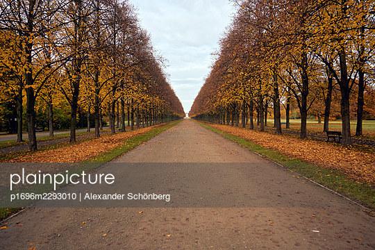 Avenue in autumn - p1696m2293010 by Alexander Schönberg