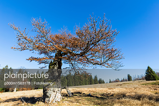 p300m1563178 von Fotofeeling