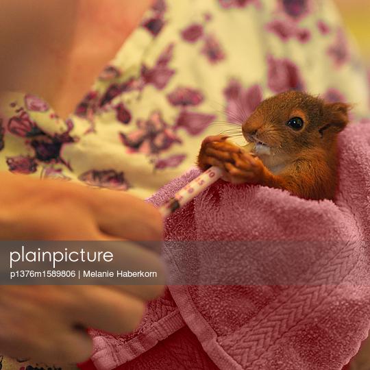 Eichhörnchen mit Ersatzmutter - p1376m1589806 von Melanie Haberkorn