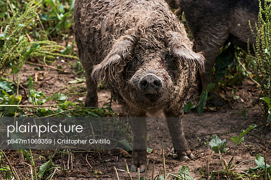Inflected - p947m1069359 by Cristopher Civitillo