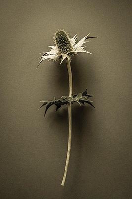 Garden weeds - p1228m1461185 by Benjamin Harte