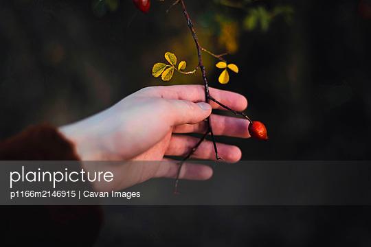 p1166m2146915 von Cavan Images