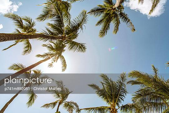 Palmen - p741m892051 von Christof Mattes