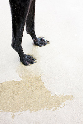 Dog legs and shadow - p1121m1440489 by Gail Symes