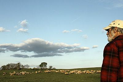 Ein Schäfer und seine Schafherde - p1019m2141952 von Stephen Carroll