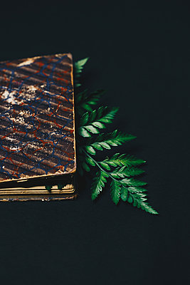 Sprig of fern and book - p1623m2220031 by Donatella Loi