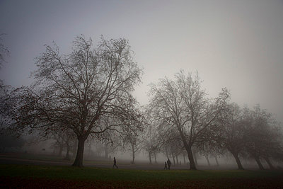 Bare trees in misty park - p92411273f by James Eckersley