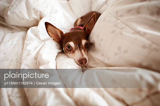 p1166m1182974 von Cavan Images