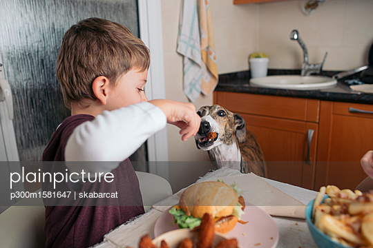 Boy feeding dog at dining table at home - p300m1581647 von skabarcat