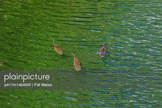 Donau - p417m1464605 von Pat Meise