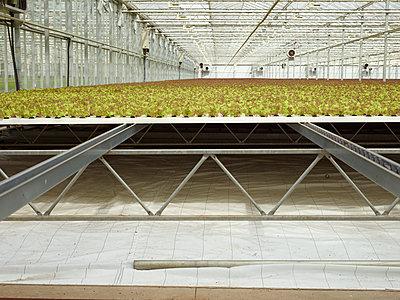 Monoculture - p1188m1002834 by Henk Wildschut