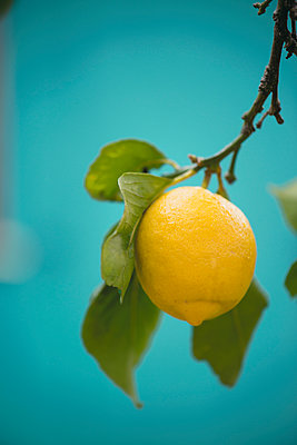 Lemon Tree - p1288m1110975 by Nicole Franke