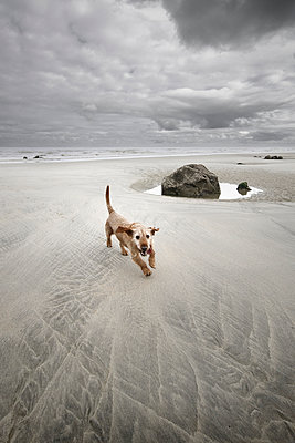 Hund am Strand - p1137m987248 von Yann Grancher