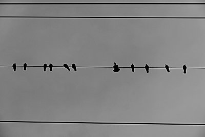 Crows on power line - p1203m1582528 by Bernd Schumacher