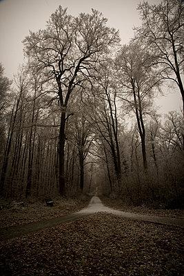 wald und wegscheide am frostigen spaetnachmittag - p627m1035198 von Chris Keller