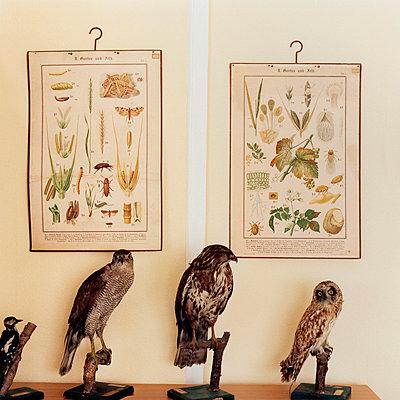Natural sciences - p9790036 by Bohnhof