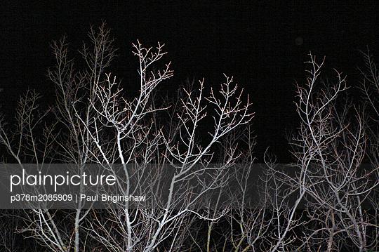 Trees At Night - p378m2085909 by Paul Briginshaw