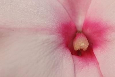 Flowers macro - p1054m2278018 by Maria Kazvan