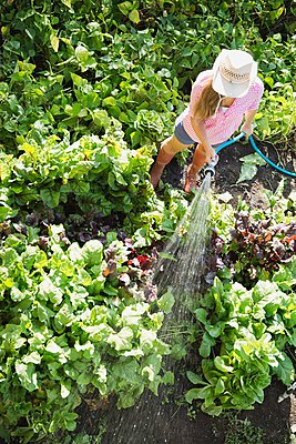 High angle view of woman watering plants in vegetable garden - p328m906630f by Hero Images