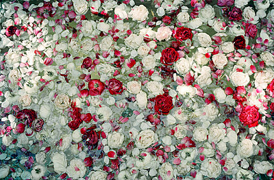 Blossoms of roses in water - p6300036 by Suzette Bross