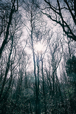 Bare winter trees  - p597m1425608 by Tim Robinson