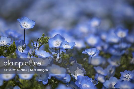 p1100m1497847 von Mint Images