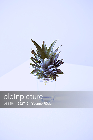 Ananas anpflanzen - p1149m1582712 von Yvonne Röder