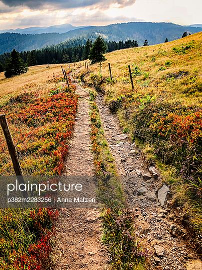 Hiking trail on the Feldberg - p382m2283256 by Anna Matzen