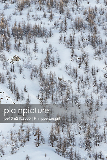 France, Wintry landscape - p910m2182360 by Philippe Lesprit