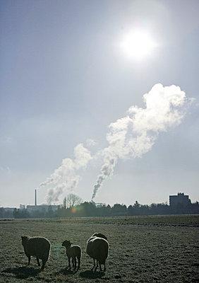 Umweltverschmutzung - p26816842 von Oliver Rüther