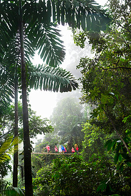Tourist walking through tropical forest - p312m1211022 by Lena Granefelt