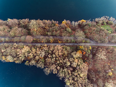 Shoreland and trees in autumn, aerial view - p586m1092013 by Kniel Synnatzschke