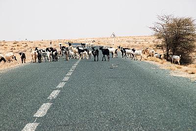 p754m1445602 by Valea Diller-El Khazrajy