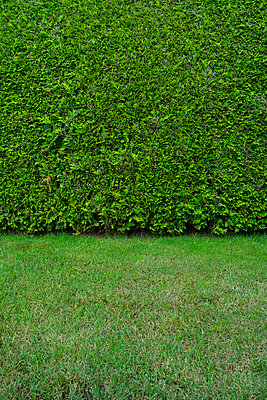 Hedge and lawn - p427m1515711 by Ralf Mohr