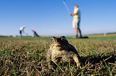 Frog close-up - p5752744 by Paer Braennstroem