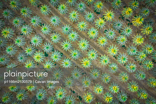 Green palm trees from above - p1166m2130579 by Cavan Images
