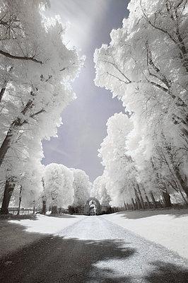 Dreamlike path - p1137m932533 by Yann Grancher
