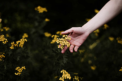 Woman holding wild yellow flowers . - p1166m2094861 by Cavan Images