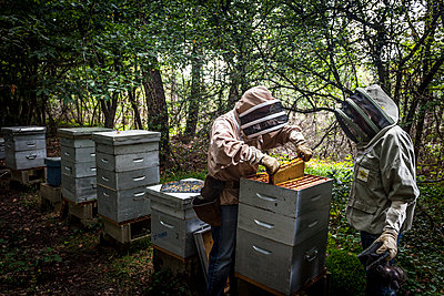 Beekeepers - p1402m1461987 by Jerome Paressant