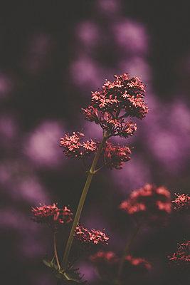 Blume - p1512m2108668 von Katrin Frohns