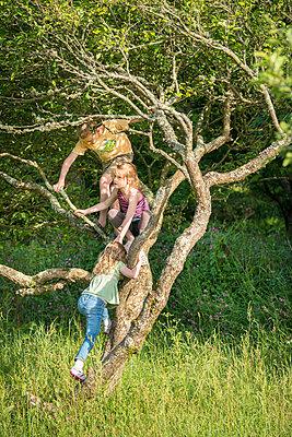 Children climbing tree in grassy field - p429m696646 by Zac Macaulay