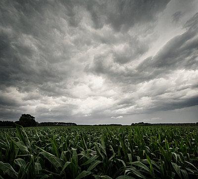 Dark storm clouds over a field - p1515m2182107 by Daniel K.B. Schmidt