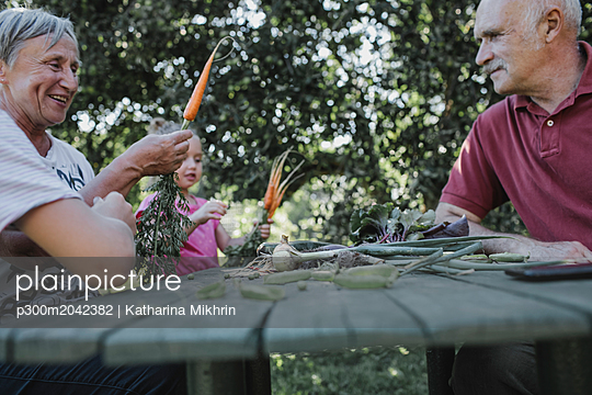 Senior couple at garden table with granddaughter harvesting carrots - p300m2042382 von Katharina Mikhrin