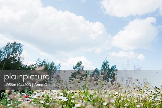 Summer field in Sweden - p956m1044920 by Anna Quinn