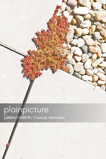 Dachbepflanzung  mit Steinen und Steinplatten - p982m1159878 von Thomas Herrmann