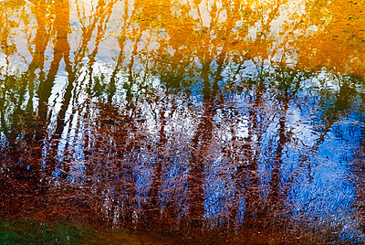 Abstract image of reflection of trees on water - p1072m828894 by chinch gryniewicz