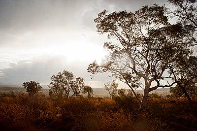 Baum im Gegenlicht - p1273m1110961 von melanka